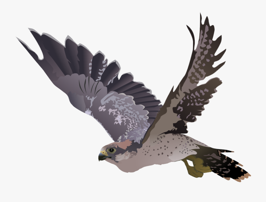 Download Free Falcon Birds Png Transparent Images.