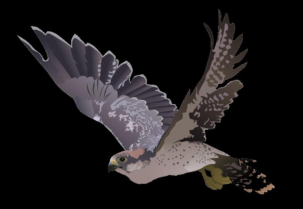 Free to Use & Public Domain Falcon Clip Art.