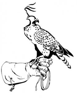 1000+ images about falconry on Pinterest.