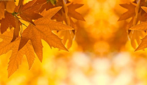 Fall Leaves Backgrounds.