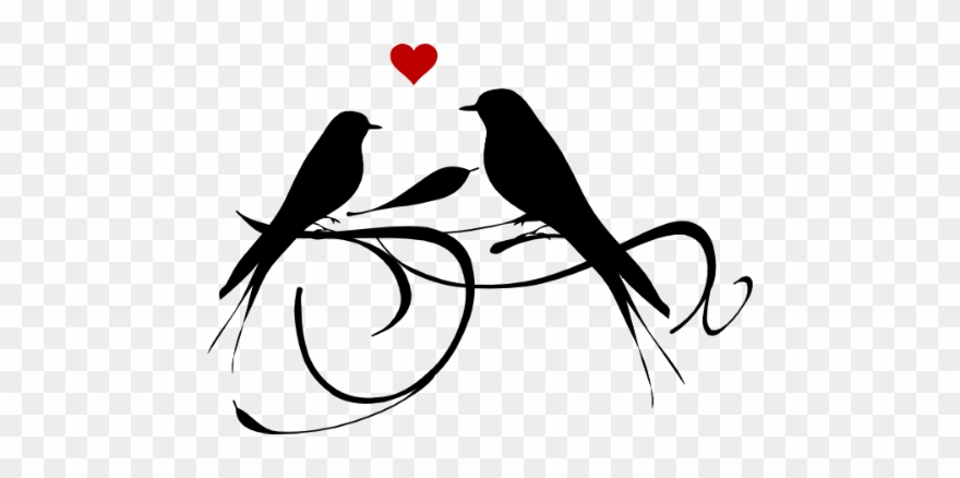 birds #love #silhouette #black #couple #animal #valentine.