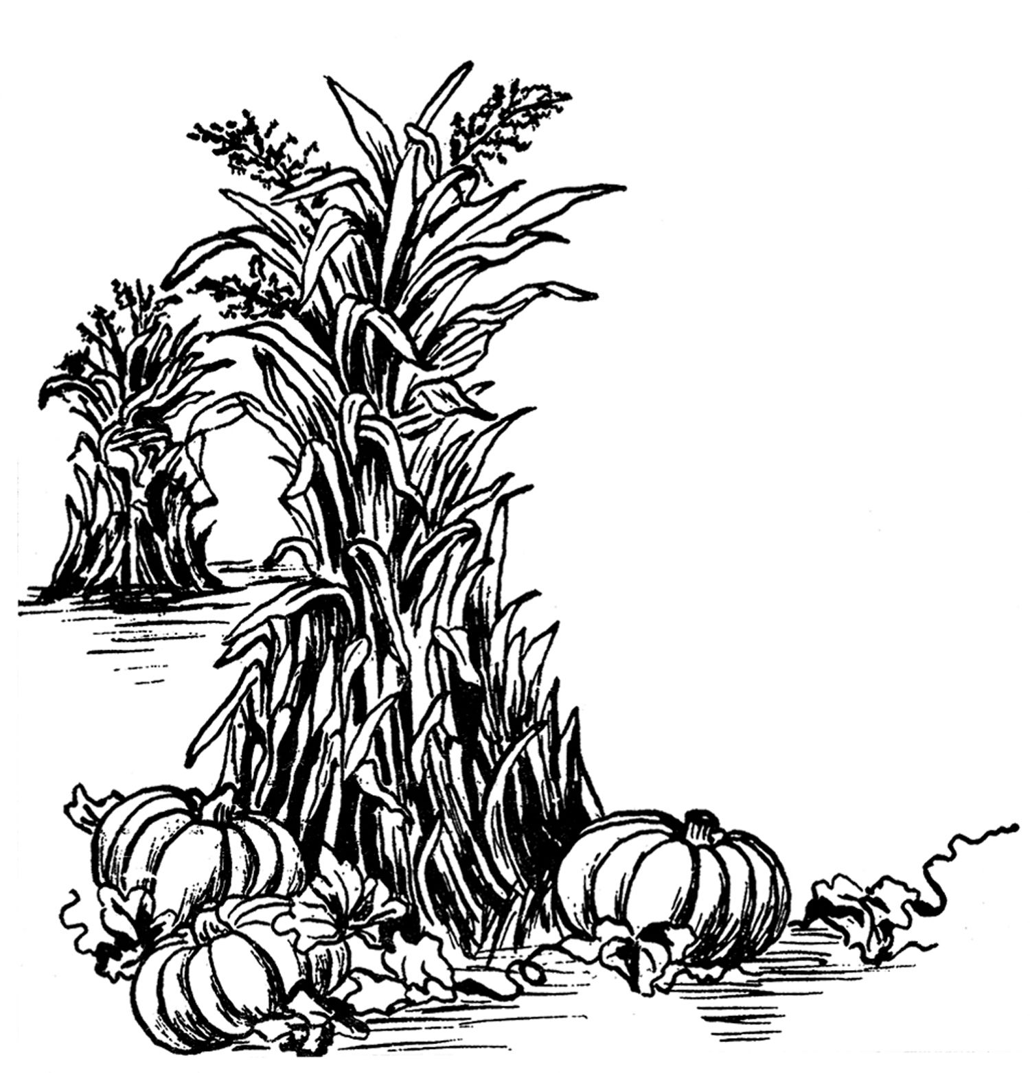 6 Thanksgiving Pumpkin Clipart.