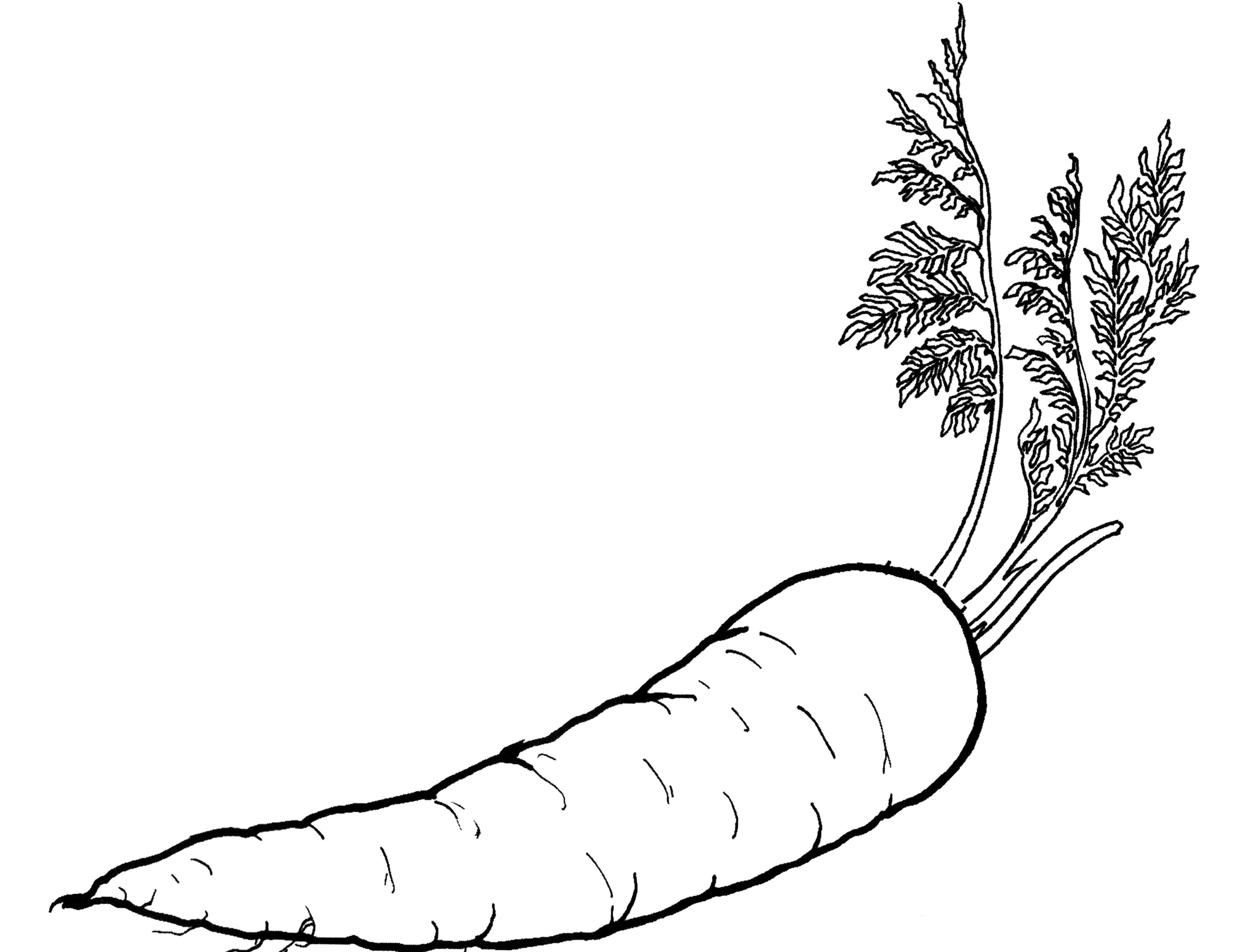 Carrots Coloring Page of Vegetables, carrots and vegetables.