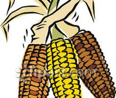 Indian corn clipart » Clipart Station.