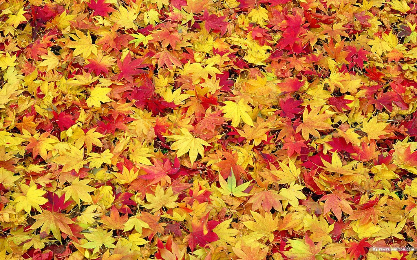 Widescreen Fall Desktop Clipart.
