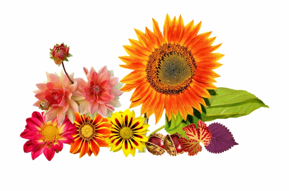 Free Autumn Flowers Png, Download Free Clip Art, Free Clip.