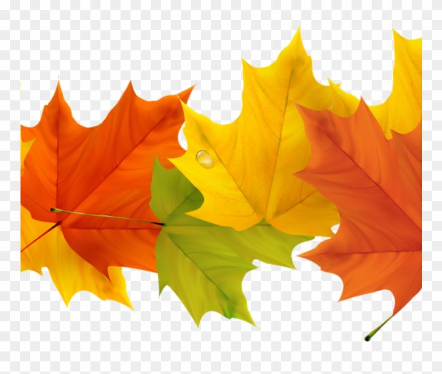 Free Fall Leaf Clip Art 19 Free Graphic Free Fall Leaves.