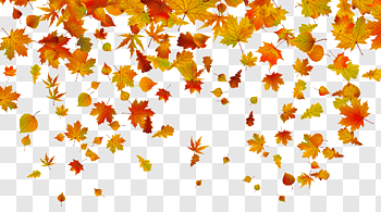 Fall Leaves cutout PNG & clipart images.