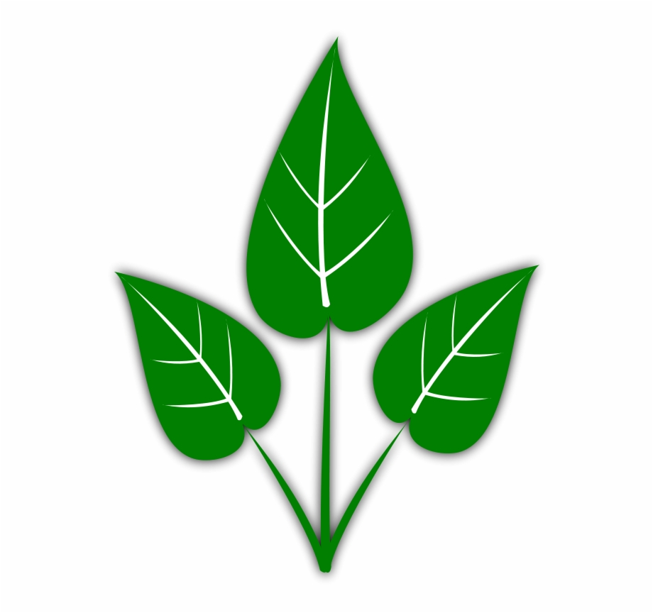 Leaf Free Leaves Clipart Free Clipart Graphics Images.