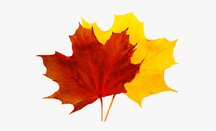 Autumn Leaves Clipart 5 Leave.