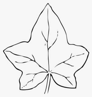 Free Leaf Outline Clip Art with No Background.
