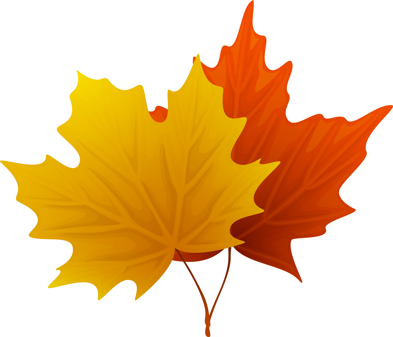 HD Fall Maple Leaves Png Decorative Clipart Imageu200b.
