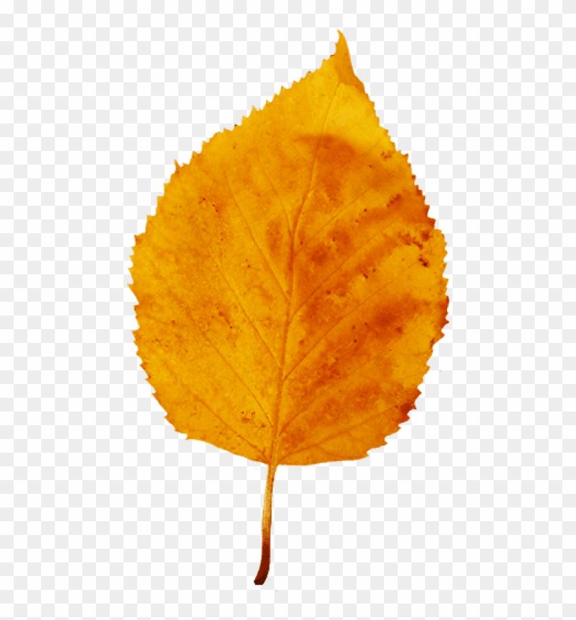 Download Fall Leaf Png Images Background.