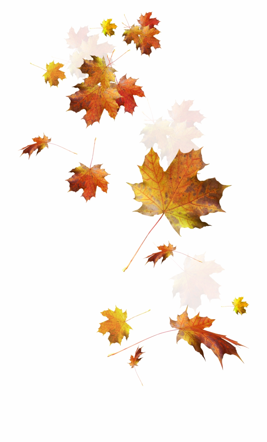 Autumn Color Leaves Leaf Falling Download Hd Png Clipart.