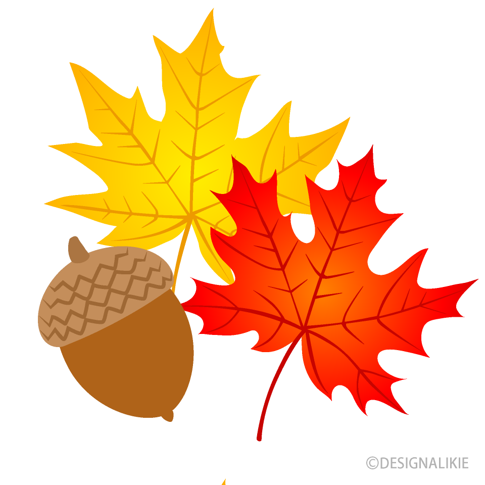 Free Maple Leaves and Acorn Clipart Image|Illustoon.
