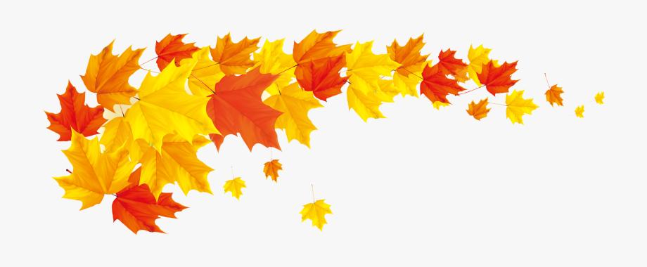 Autumn Leaf Color Maple Transprent.