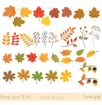 Autumn leaves clipart, Fall leaves clipart, Autumn leaf clip art.
