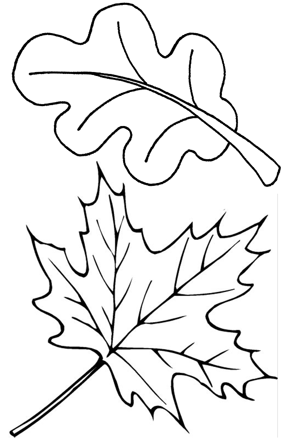 Two fall leaves coloring page.