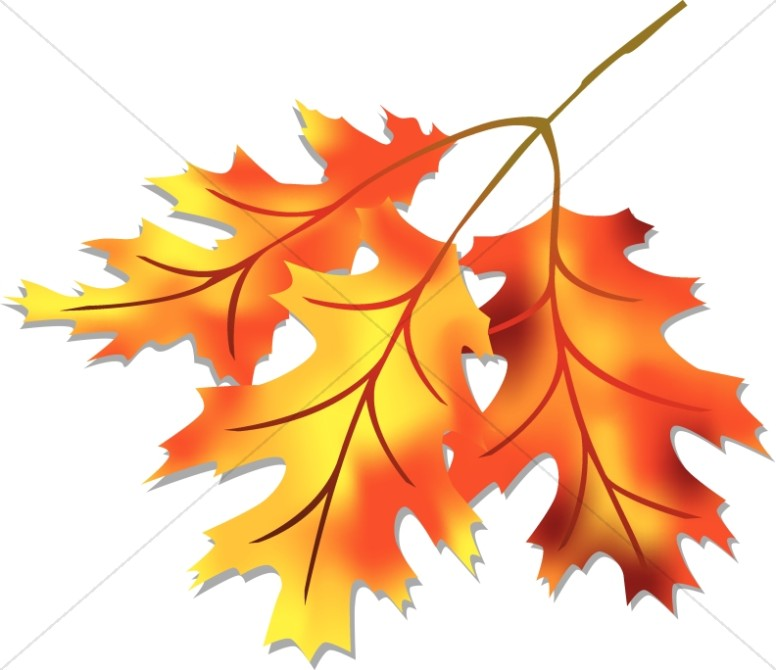 Three Fall Leaves Clipart.