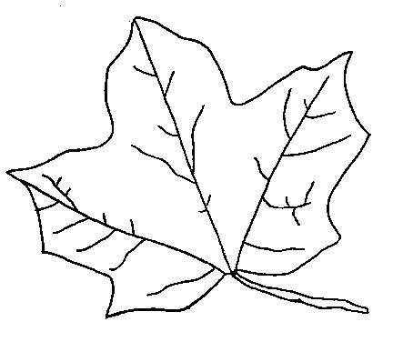 Fall Leaves Colouring Sheets.