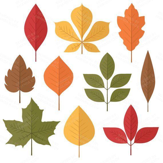 Professional Autumn Leaf Clipart, Autumn Leaf Vectors, Fall.