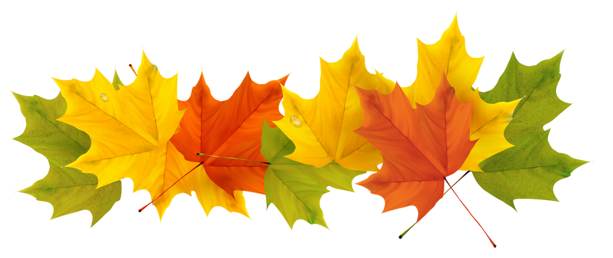 Transparent Fall Leaves PNG Picture.