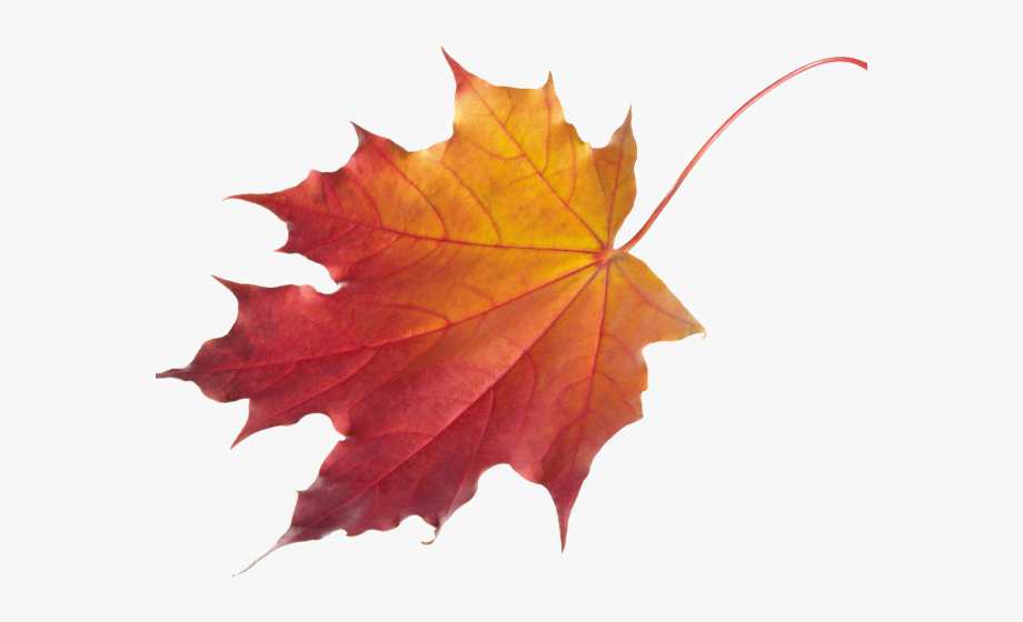 Autumn Leaves Clipart Chinar.