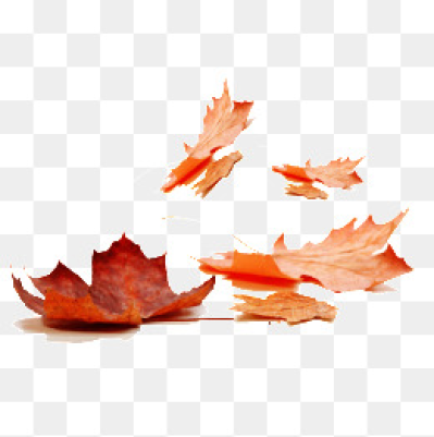 Download Free png Fall Leaves PNG Images.