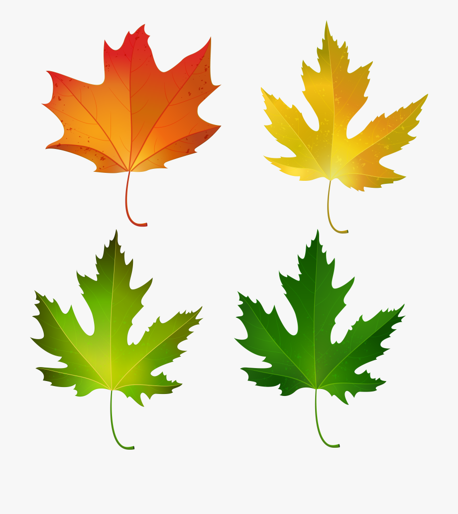 Fall Maple Leaves Set Png Decorative Clipart Image.