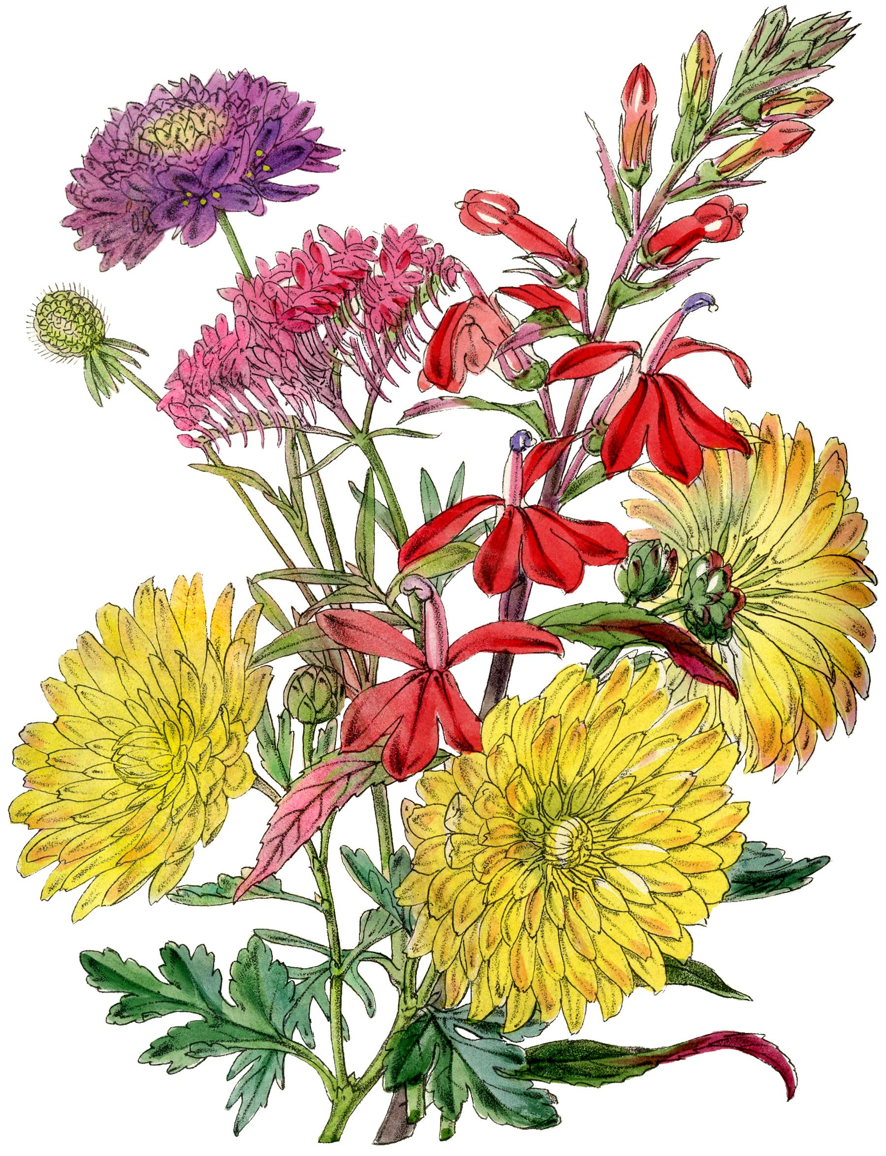 HD Fall Mums Clip Art Pictures » Free Vector Art, Images, Graphics.