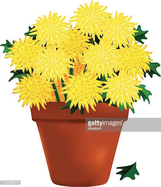 Mum Plant Clipart & Free Clip Art Images #9323.