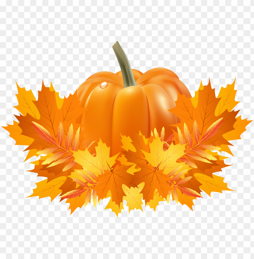 transparent library apple and pumpkin page border.