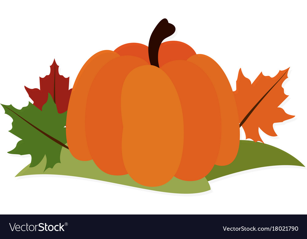 Pumpkin leaves fall decoration thanksgiving.