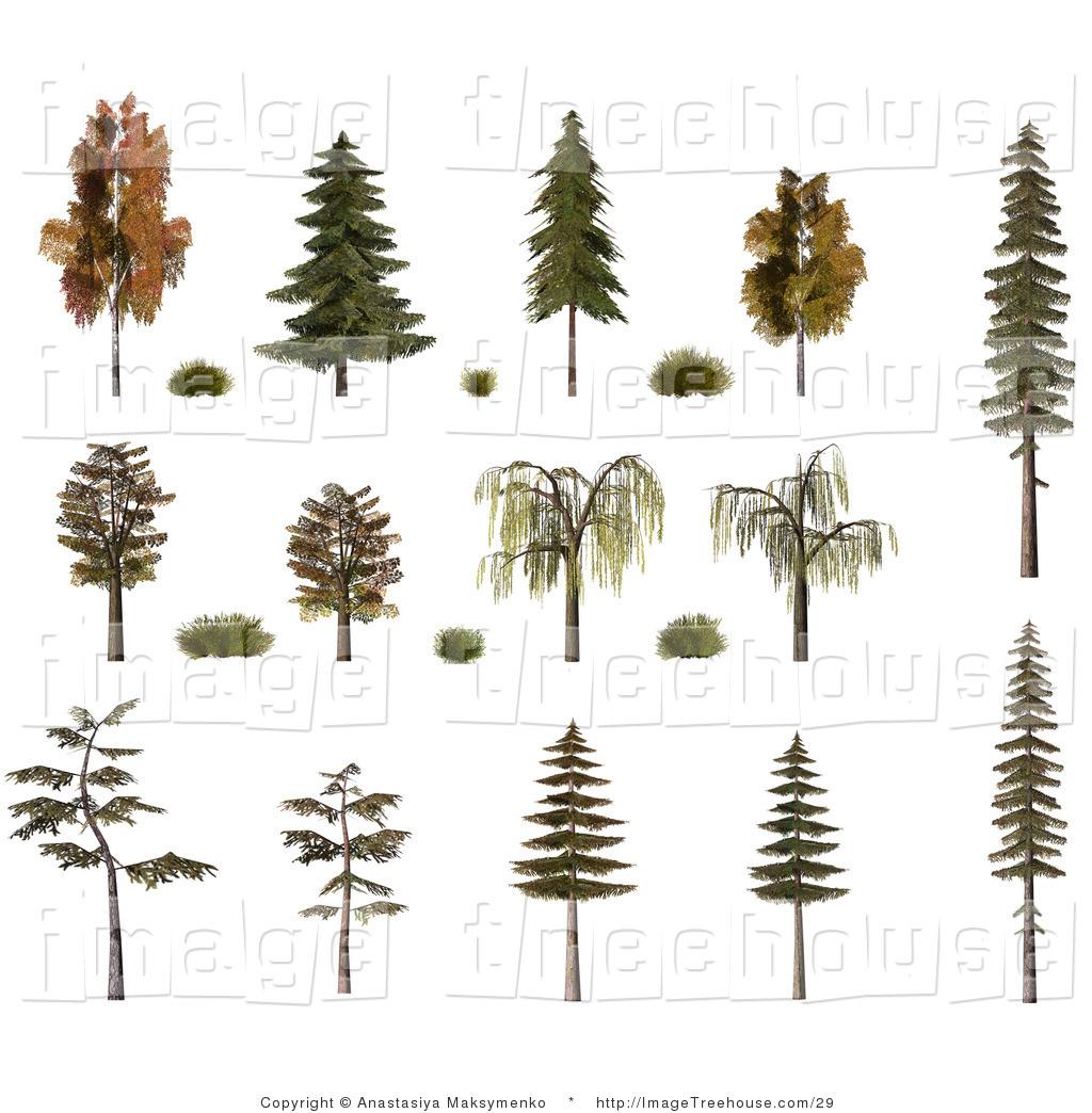 Clipart of 3d Trees and Shrubs, Including Birch, Oak, Pine, Fir.