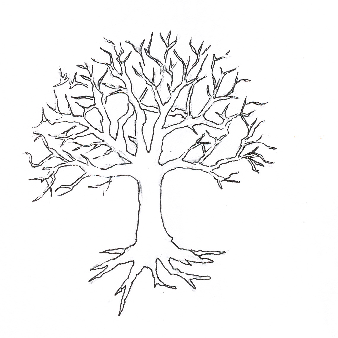 fall tree clipart black and white vines clipground grape vine clipart images grape vine clipart border