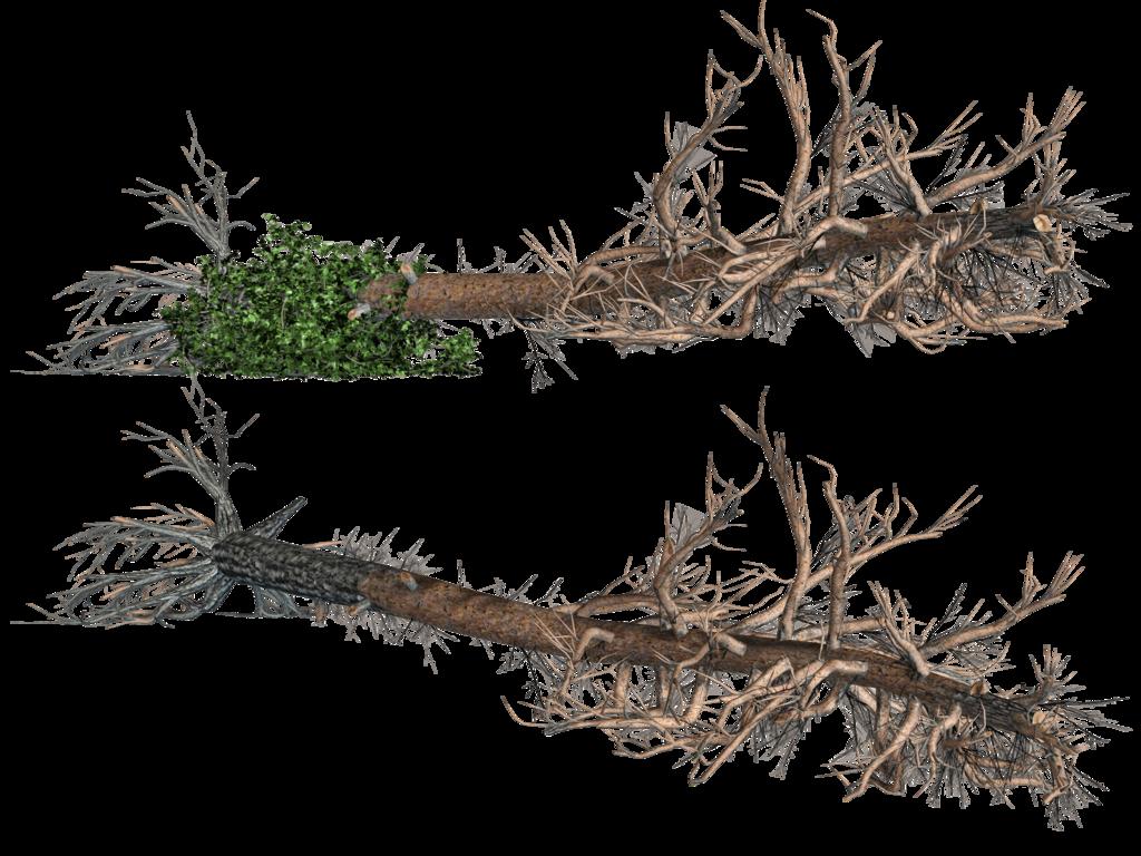 Clipart fallen tree.