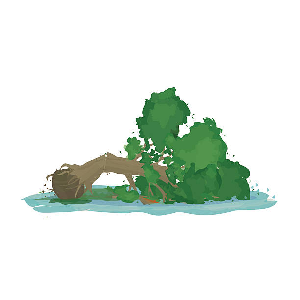 Best Fallen Tree Illustrations, Royalty.