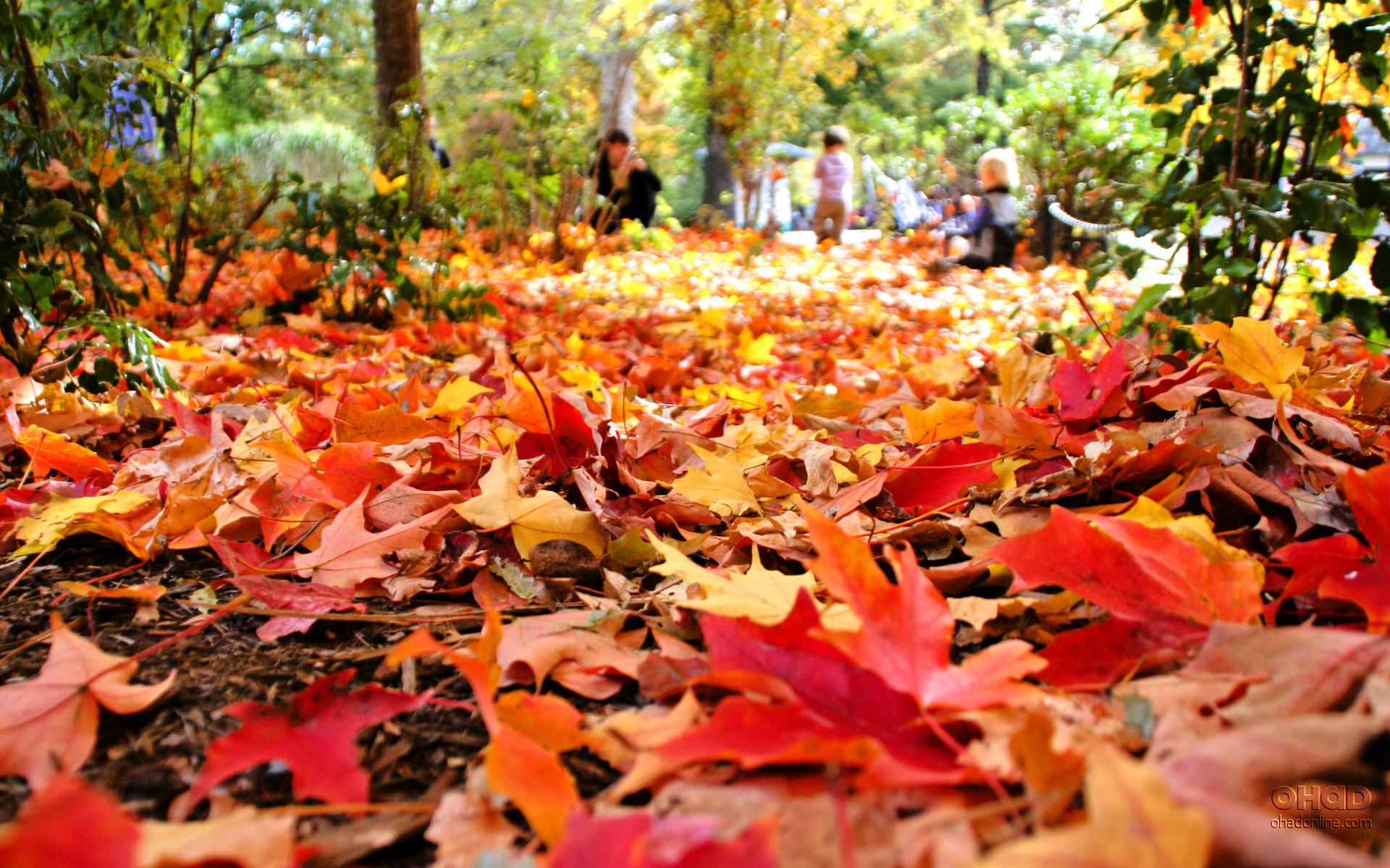 Autumn Leaves Falling Clip Art.