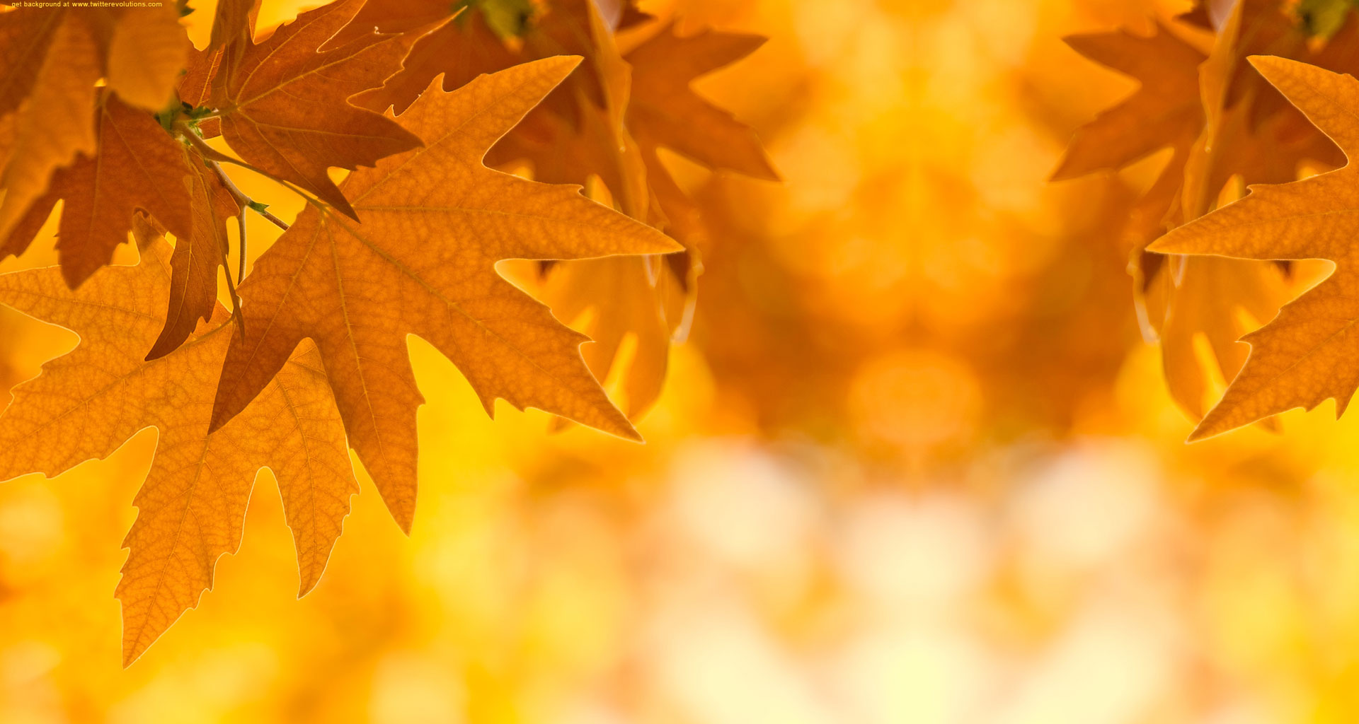Autumn Leaves Background Clipart.