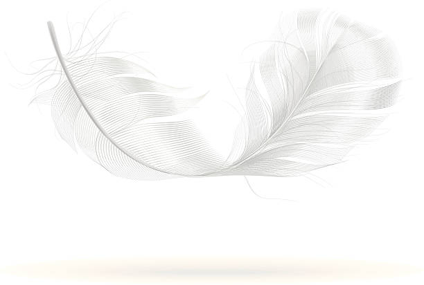 Best White Feather Illustrations, Royalty.