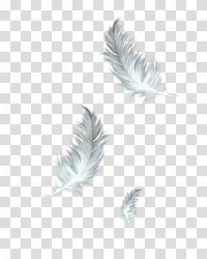 Feather PNG clipart images free download.