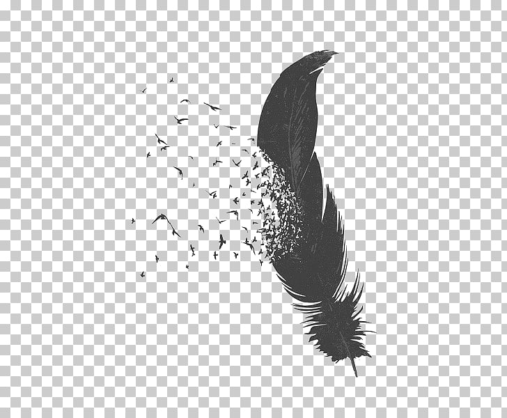 Bird Feather Drawing, Falling Feather, gray feather.
