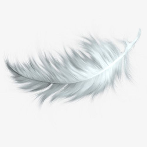Falling White Feathers, White Feather, Falling Feathers PNG.