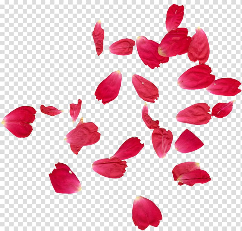Pink petals border template, Faridabad Petal Rose Flower.
