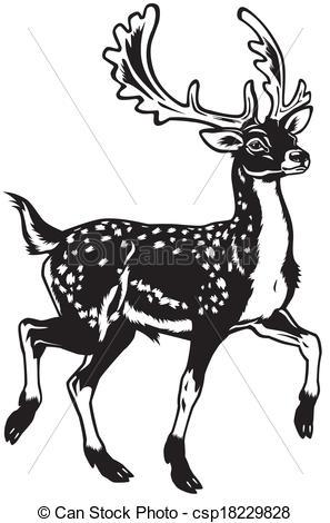 Vector Illustration of fallow deer black white.