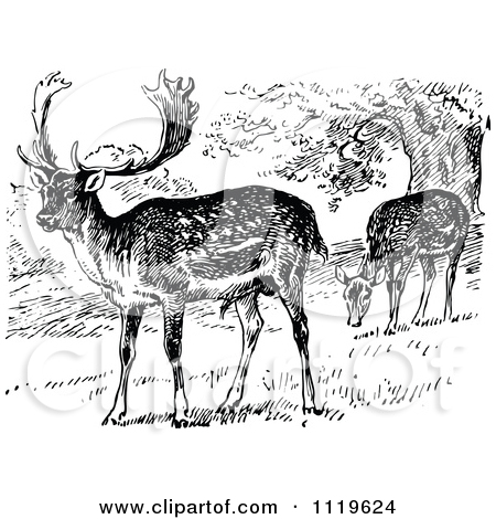 Clipart Of Retro Vintage Black And White Grazing Fallow Deer.
