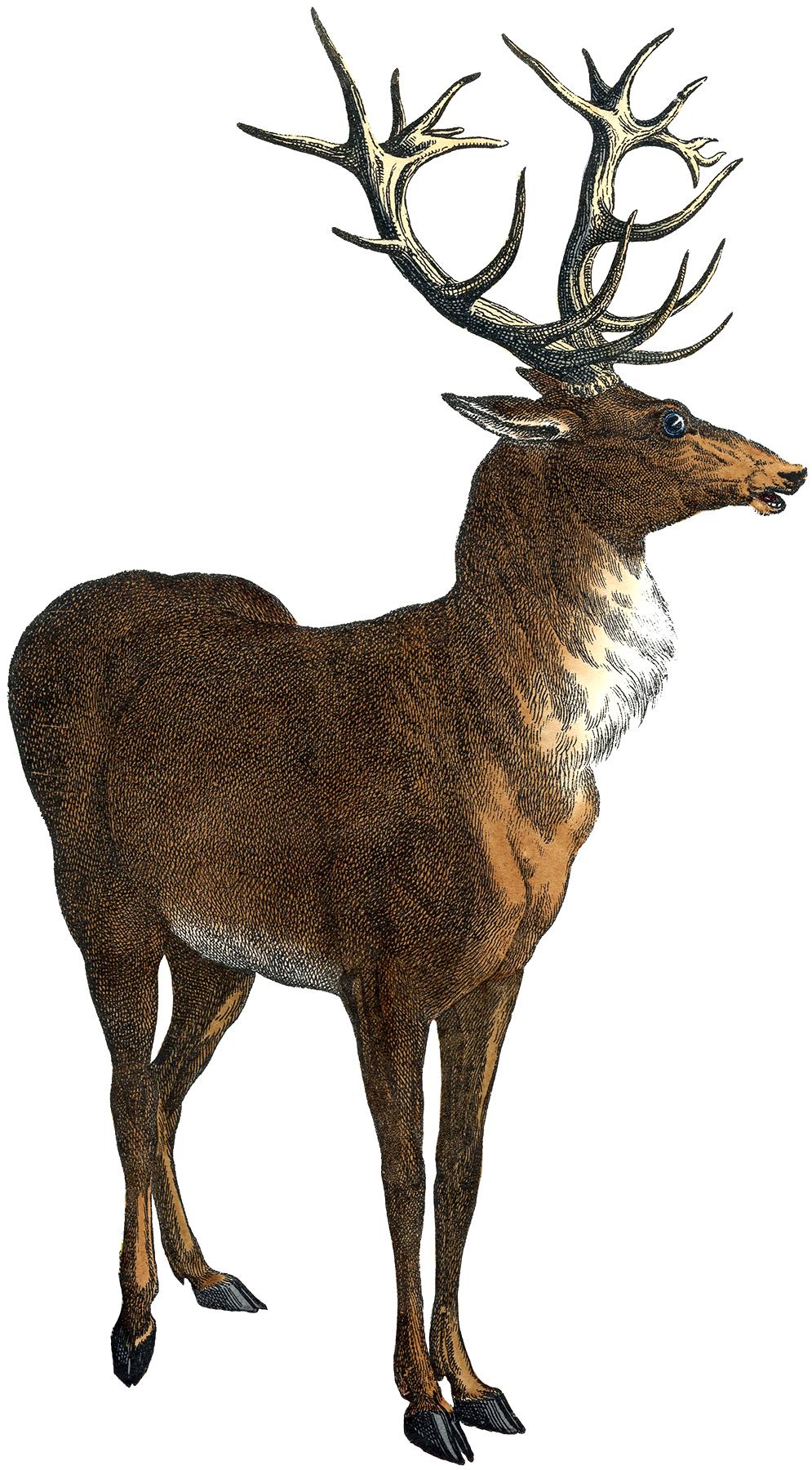 Deer Graphics.