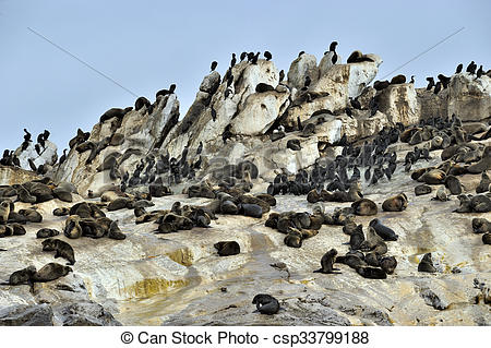 Pictures of Seal Island, located in False Bay near SImon's Town.