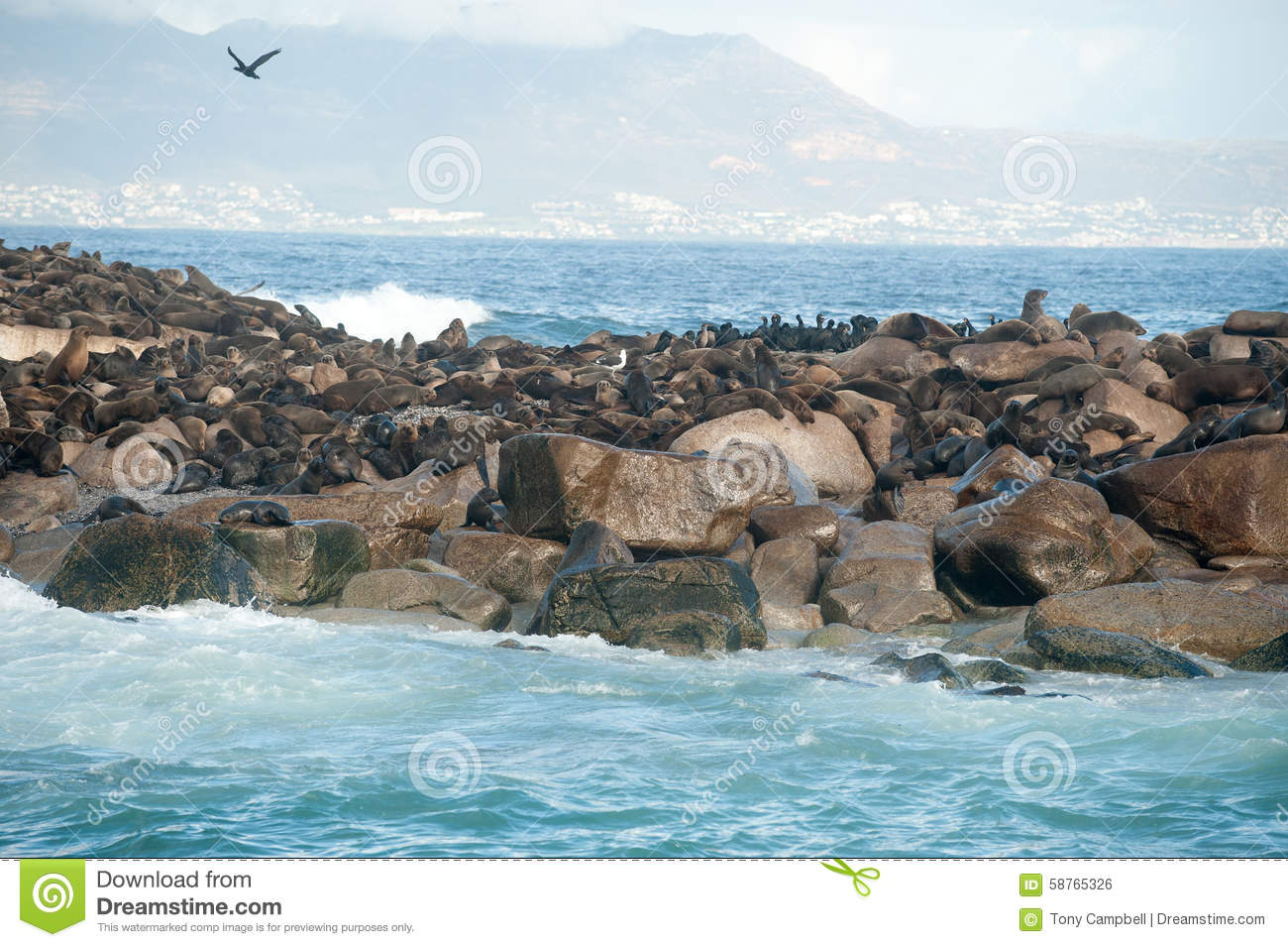 Seal Island In False Bay, South Africa Stock Photo.