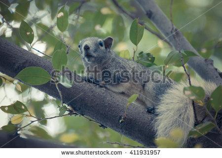 "squirrel Family"" Stock Photos, Royalty."